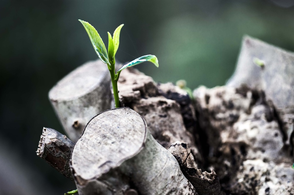 Seedling growing from a log