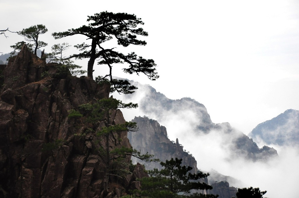 Image of trees on a cliff with cloud/fog falling down the mountainside