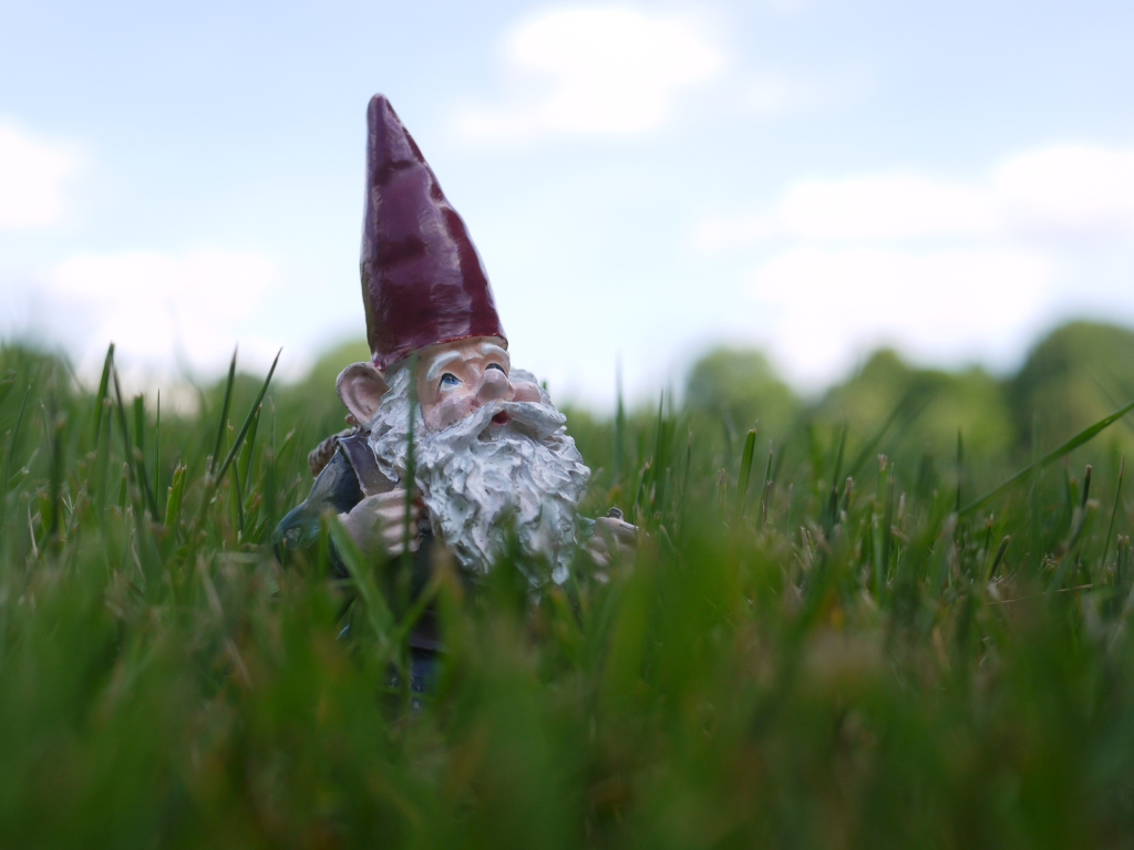 Garden gnome with red hat and long white beard in grass, close-up